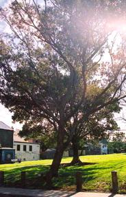 002522mogostree